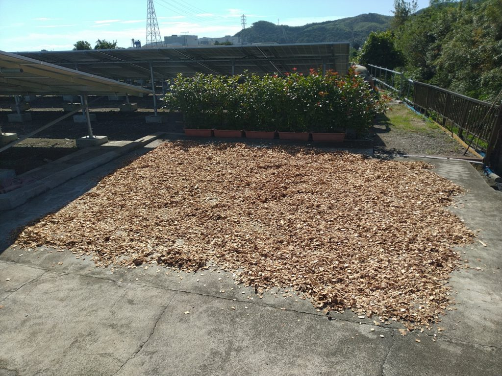 biomass woodchips drying at solar array